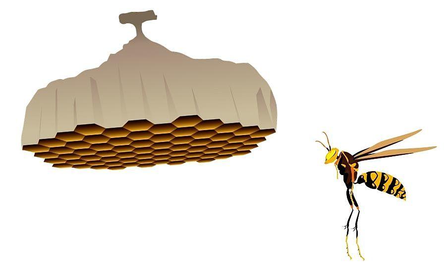 蜂の巣駆除…